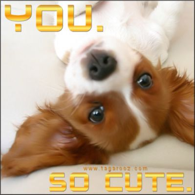 You so cute | Tagarooz.com
