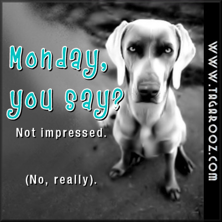Monday, you say? Not impressed. | Tagarooz.com