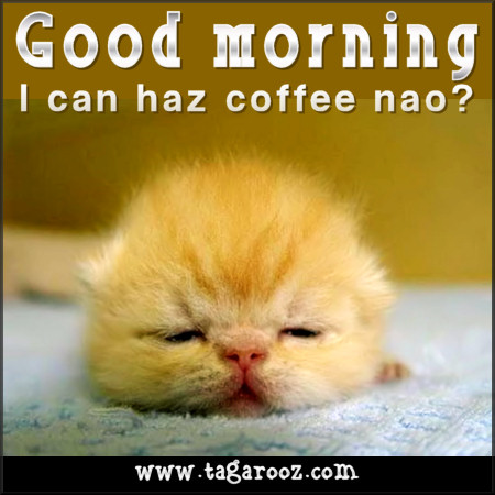Good morning. I can haz coffee nao? | Tagarooz.com
