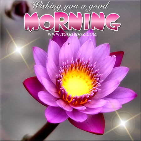 Wishing you a good morning | Tagarooz.com