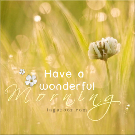 Have a wonderful morning | Tagarooz.com