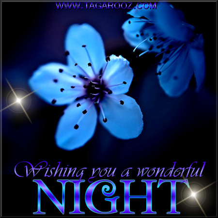 Wishing you a wonderful night | Tagarooz.com