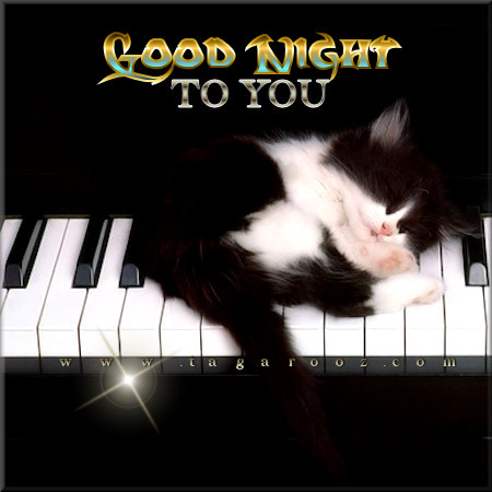 Good night to you | Tagarooz.com