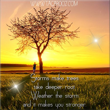 Storms make trees take deeper root. Weather the storm and it makes you stronger. | Tagarooz.com