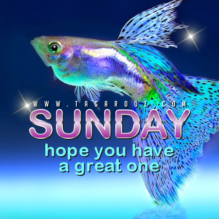 Sunday Hope You Have a Great One | Sunday Comments and Graphics