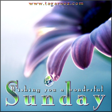 Wishing you a wonderful Sunday | Tagarooz.com