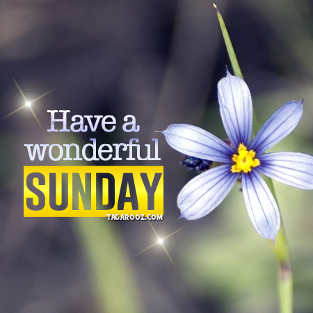 Have a Wonderful Sunday | Sunday comments, Happy Sunday graphics