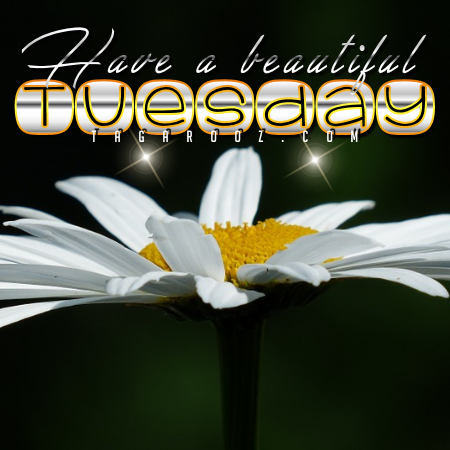 Have a Beautiful Tuesday | Tuesday Comments & Graphics