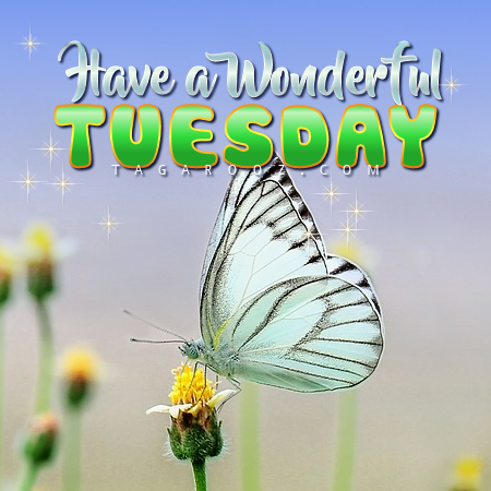 Have a WonderfulTuesday | Tuesday Comments & Graphics