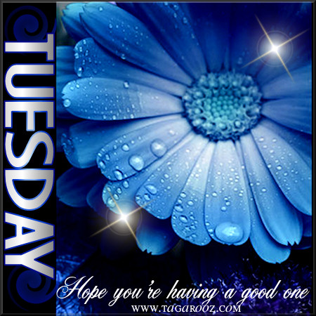Tuesday Hope You're Having a Good One | Tuesday Comments & Graphics