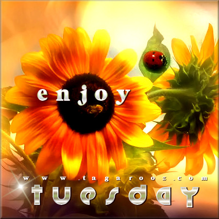 Enjoy Tuesay | Tuesday Comments & Graphics
