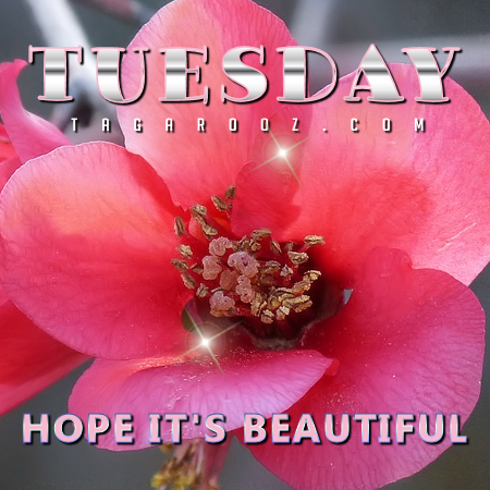 Tuesday Hope Its Beautiful | Tuesday Comments & Graphics