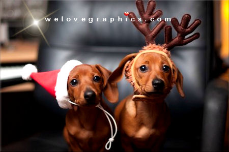 christmas-reindeer-puppies